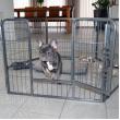 Výběh pro psy a další zvířata - velikost M - 8 segmentů, výška 80 cm